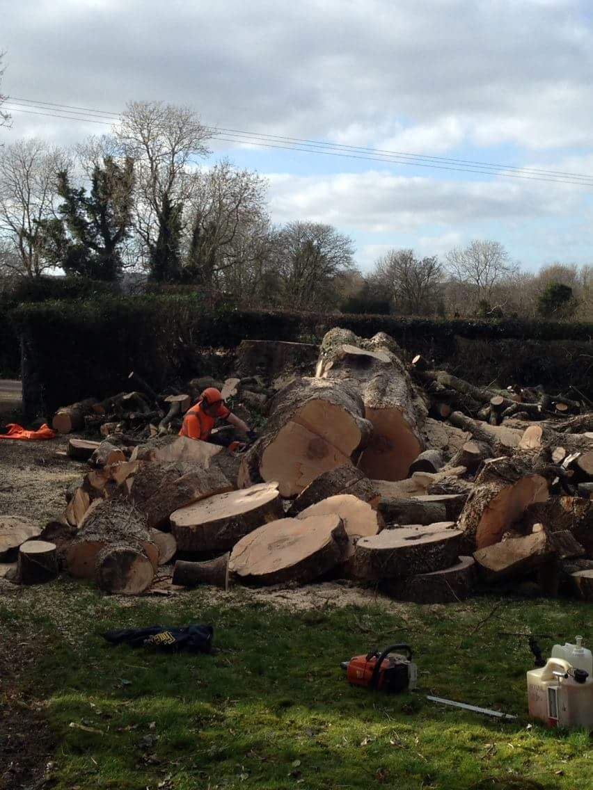 tree removal northern ireland